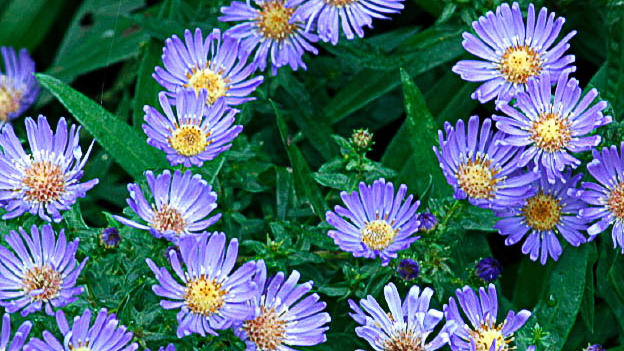 9 Best Summer Flowers For Your Garden