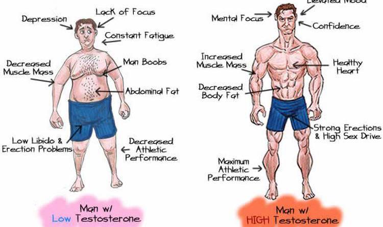 Increase Testosterone Level