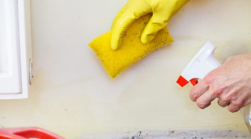 Best way to recover mold remedy